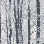 Frosted Wood Wallpaper Arthouse 670200